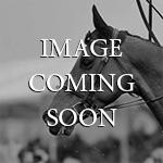 Horsestock